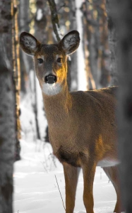 animal animal photography buck cold