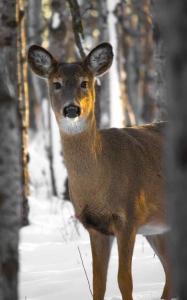 animal animal photography buck cold